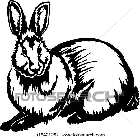Animal Bunny Rabbit Clipart
