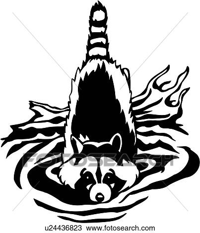 Clipart Of Animal Coon Raccoon U24436823