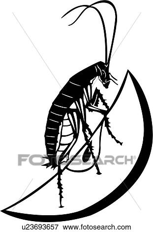 clip art of bugs cockroach insect u23693657 search clipart rh fotosearch com cockroach clipart free cockroach climates