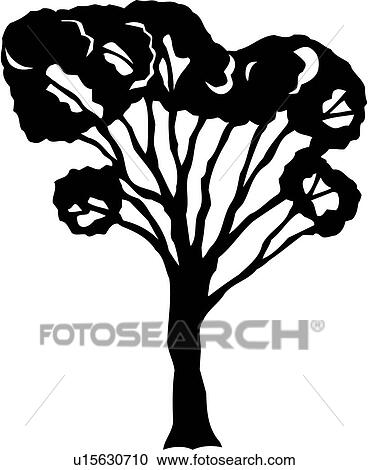 Elm Tree Varieties Clipart
