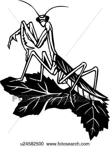 Clipart of , bugs, insect, praying mantis, u24582500 - Search Clip ...