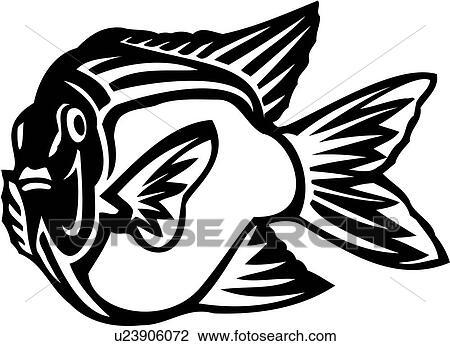 Clipart Of Animal Fish Garibaldi Ocean Species U23906072