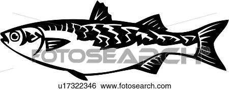 clip art of animal fish mullet ocean species u17322346 rh fotosearch com Mullet Clip Art Black and White Mullet Outline
