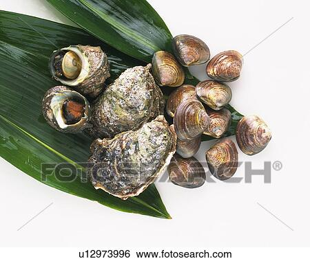 373a73988fd76c Stock Photograph - Variety types of shellfish, high angle view. Fotosearch