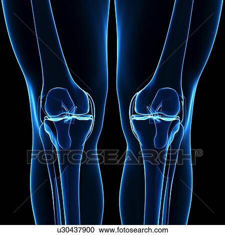 Stock Illustrationen - menschliches bein, knochen, kunstwerk ...