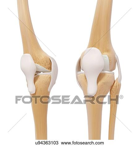 Zeichnung - menschliches bein, knochen, kunstwerk u94363103 - Suche ...