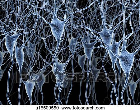 Stock Illustrations of Nerve cells, artwork u16509550 - Search ...