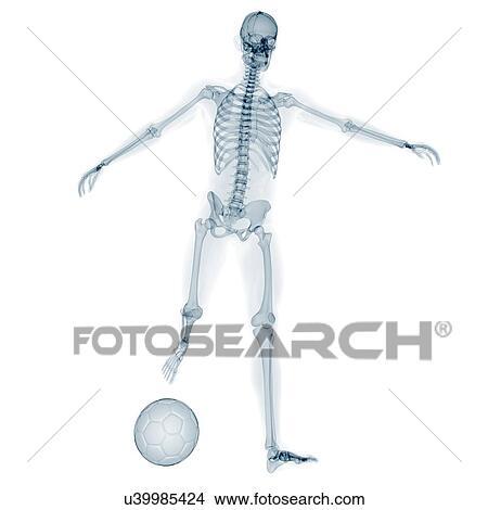 Dibujos - esqueleto, jugar al balompié, ilustraciones u39985424 ...