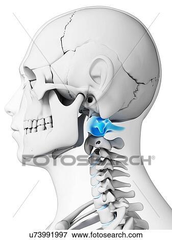 Stock illustration of human neck bones artwork u73991997 search human neck bones artwork ccuart Choice Image