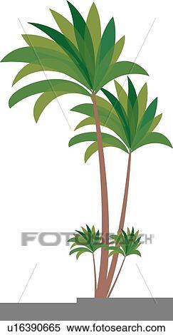 グラフィック ヤシの木 イラスト U16390665 Fotosearch