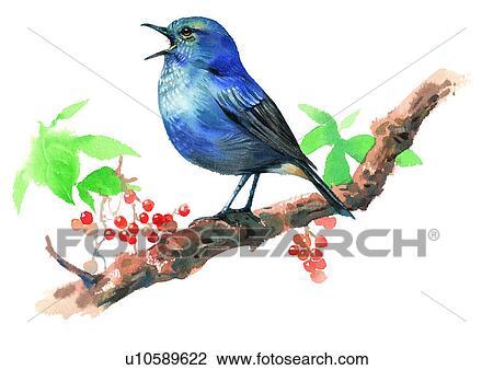 Suluboya Painting Kus Cizim U10589622 Fotosearch
