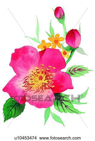 Dessins Fleur Aquarelle Rouges Plante U10453474 Recherche De