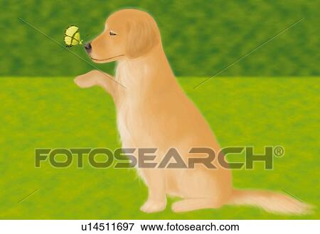 Stock Illustration Of Butterfly Perching On Nose Of Golden Retriever