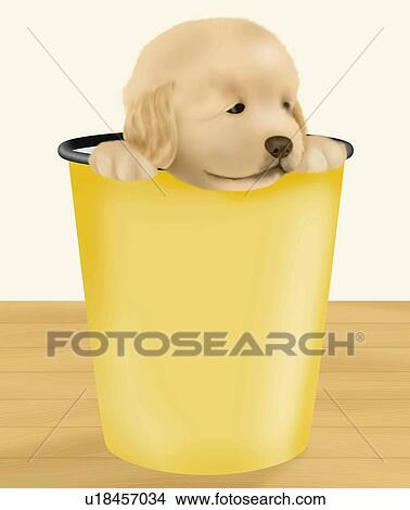 drawings of golden retriever puppy in a bucket front view u18457034