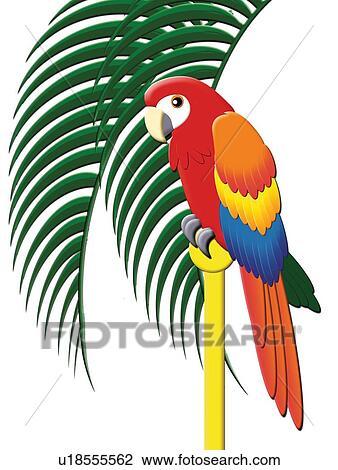Coloré Perroquet Peinture Illustration Dessin
