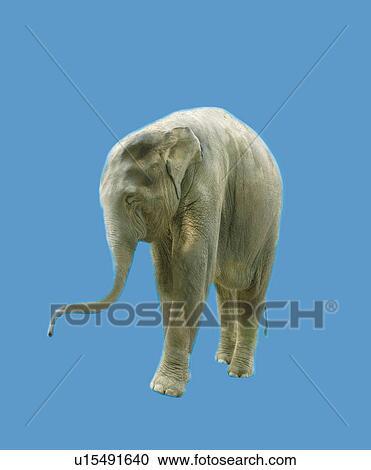 Smiling Elephant, Side View, CG Clipart | u15491640 ...