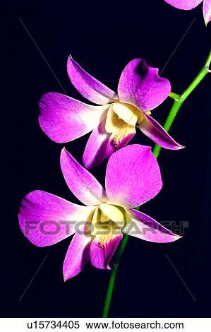 colección de imágen flor planta orquídeas naturaleza orquídea