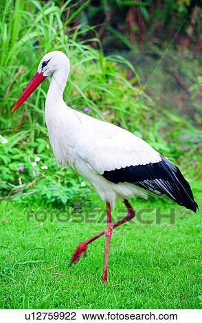 μεγάλο πουλί κινητό