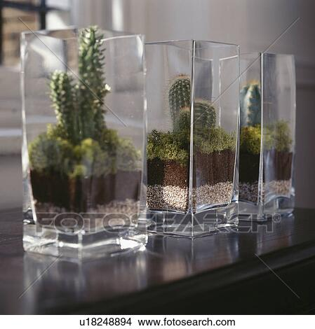 Stock Photo Of Close Up Of Cacti In Square Glass Vases U18248894