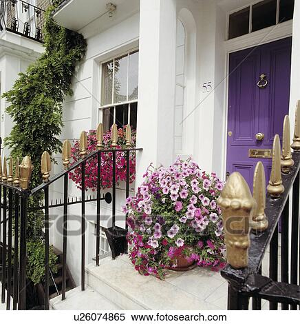 Stock Image Of Pink Petunias In Pot On Steps To Purple Front Door On