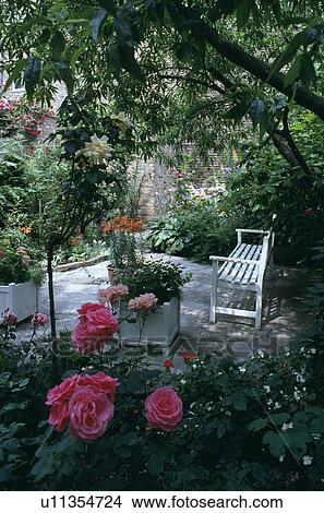 Banque De Photo Roses Roses Et Blanc Banc Sur Patio Dans