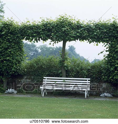 Pleasing White Bench And Pleached Tree In Country Garden In Summer Ncnpc Chair Design For Home Ncnpcorg