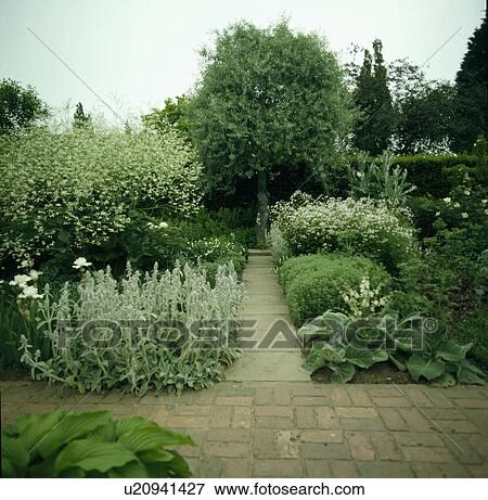 13 10 Brick Paths In White Garden At Sissinghurst Showing Silver And Grey Foliage Plants Olive Mullien Lamb S Ears Crambe