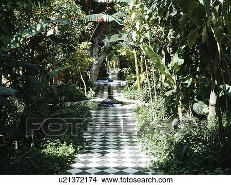 Black And White Chequerboard Tiled Path Through Shrubs And Banana
