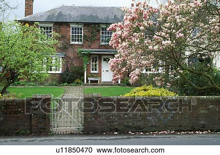Magnolia Tree In Garden In Front Of Traditional Country House In