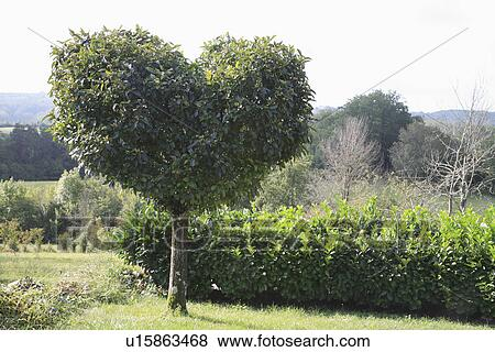 Novelty Hedges Topiary Trees Gardens Stock Photo U15863468