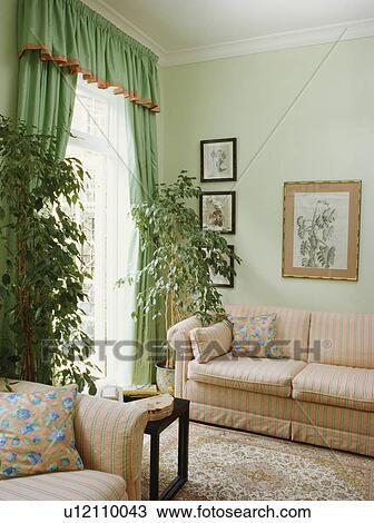 Houseplants In Traditionele Pastel Groene Woonkamer Met Groene Gordijnen En Roze Sofa Stock Afbeelding U12110043 Fotosearch