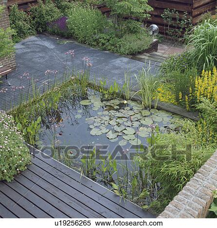 Pond With Decking And Water Plants In Town Garden Stock