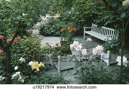 Banque De Photo Roses Roses Et Blanc Banc Dans Pave Ville