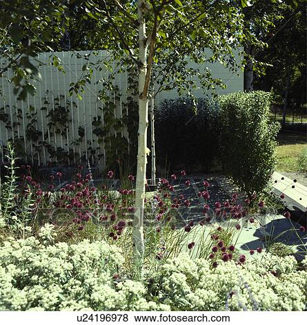 Small Tree Underplanted With Perennials In Country Garden In