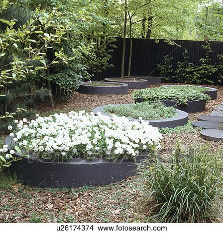 Architectural Designed Garden With Series Of Circular Raised Beds