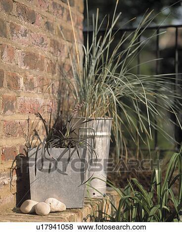 Grassen In Pot.Close Up Van Grassen In Potten Op Kleine Gemeente Dakterras In Zomer Stock Foto