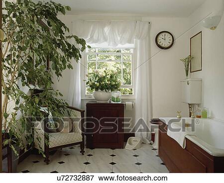 Groß, grün, houseplant, und, weiß, drapiert, vorhang, in, weiß, badezimmer,  mit, schwarz weiß, tiled boden Stock Foto
