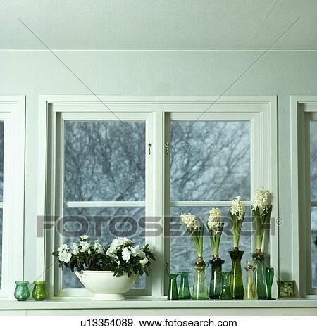 Bulbi In Vaso Di Vetro.Primo Piano Di Bianco Giacinti In Verde Bulbo Vetro Vasi Su Davanzale Finestra Con Bianco Azalea In Vaso Archivio Fotografico