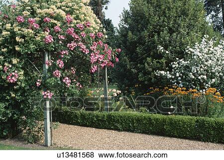 Rose, et, blanc, escalade, roses, sur, rustique, poteau, à côté de, chemin  gravier, dans, été, jardin Banque de Photo
