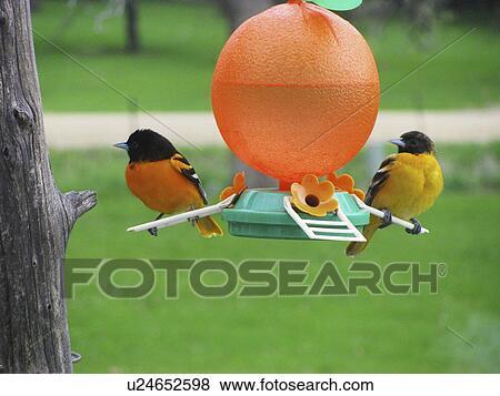 κορίτσι σε τεράστιο πουλί