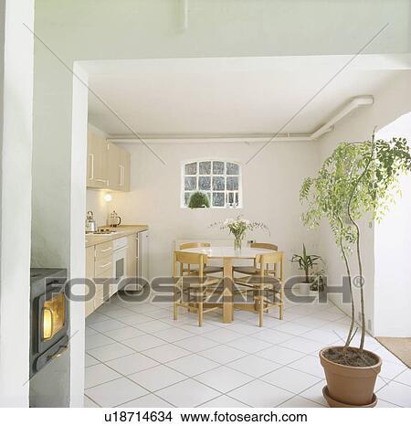 Colección de foto - alto, planta de interior, y, blanco, cerámico ...