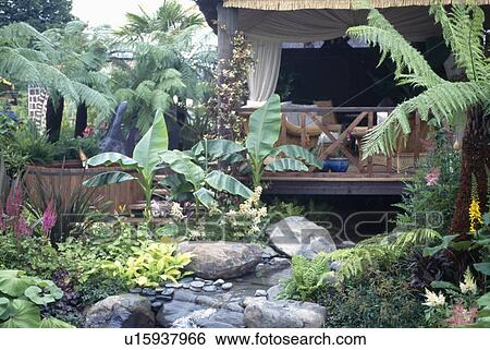 Stock Images of Large tree ferns and banana plants beside stream in ...