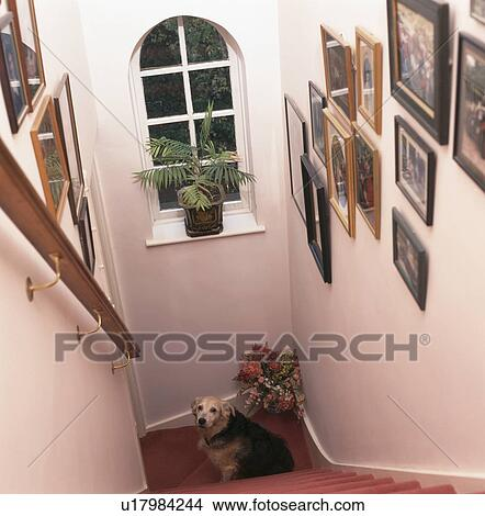 Stock Photo Of Looking Down Staircase With Dog Sitting Below Arched