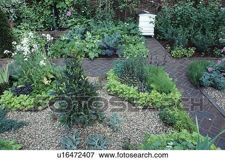 Petit, baie, arbrisseau, dans, gravier, dans, formel, jardin herbe, à,  pavé, herringbone, brique, chemins, et, blanc, ruche Banque de Photo