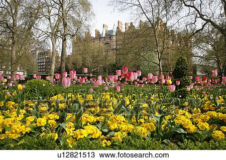 Stock Photo Of England London Russell Square Spring Flowers In