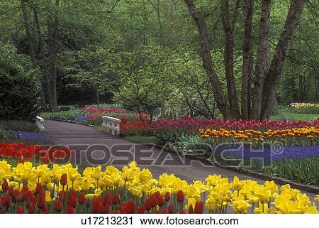 Stock fotografie nederland keukenhof tuinen mooi tulpen