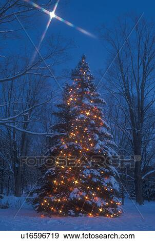 christmas tree outdoor tree starlight decorations holiday snow winter a large outdoor christmas tree is decorated with colorful lights under a full