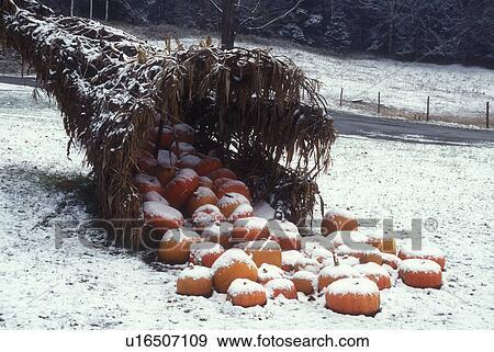 cornucopia, first snow, fall decoration, pumpkin, The ...