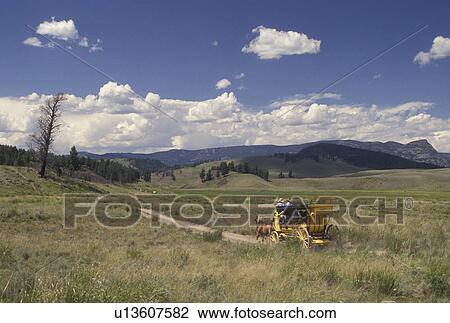 Stage Coach Yellowstone National Park Wy Tower Junction Wyoming Stage Coach Ride Through The Scenic Countryside At Tower Roosevelt In Yellowstone Nat L Park In Wyoming Stock Image U13607582 Fotosearch