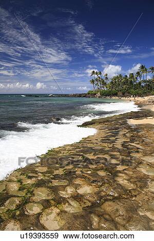 Laniakea Beach Hawaii U S A